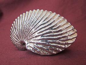 Silver Shell